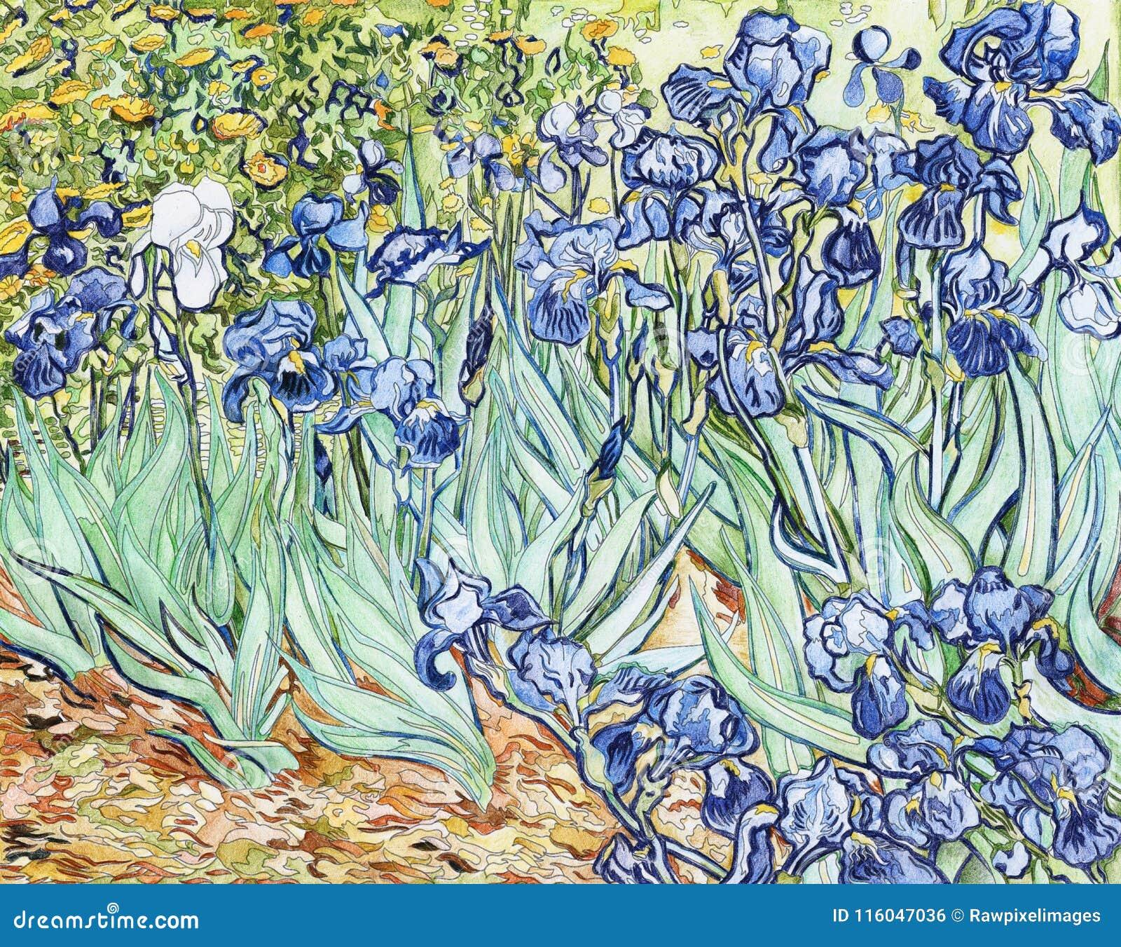 vincent van gogh lilies