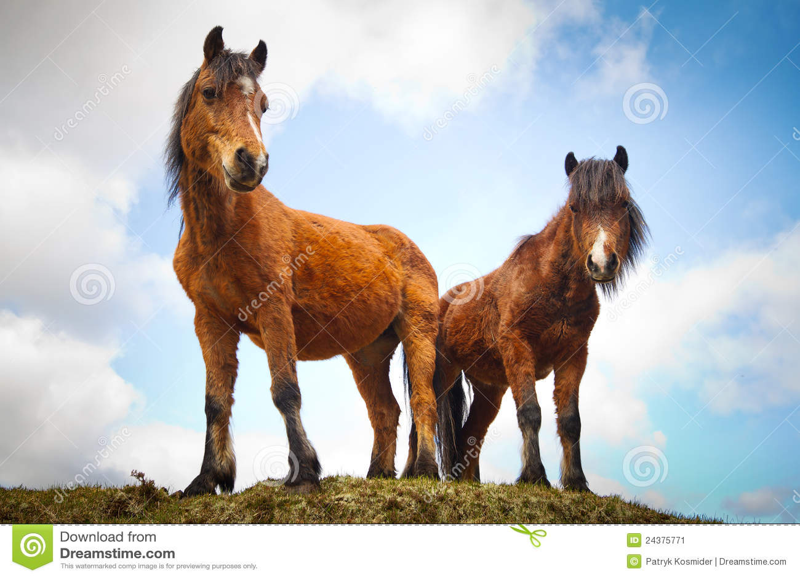 Irish horses on the hill