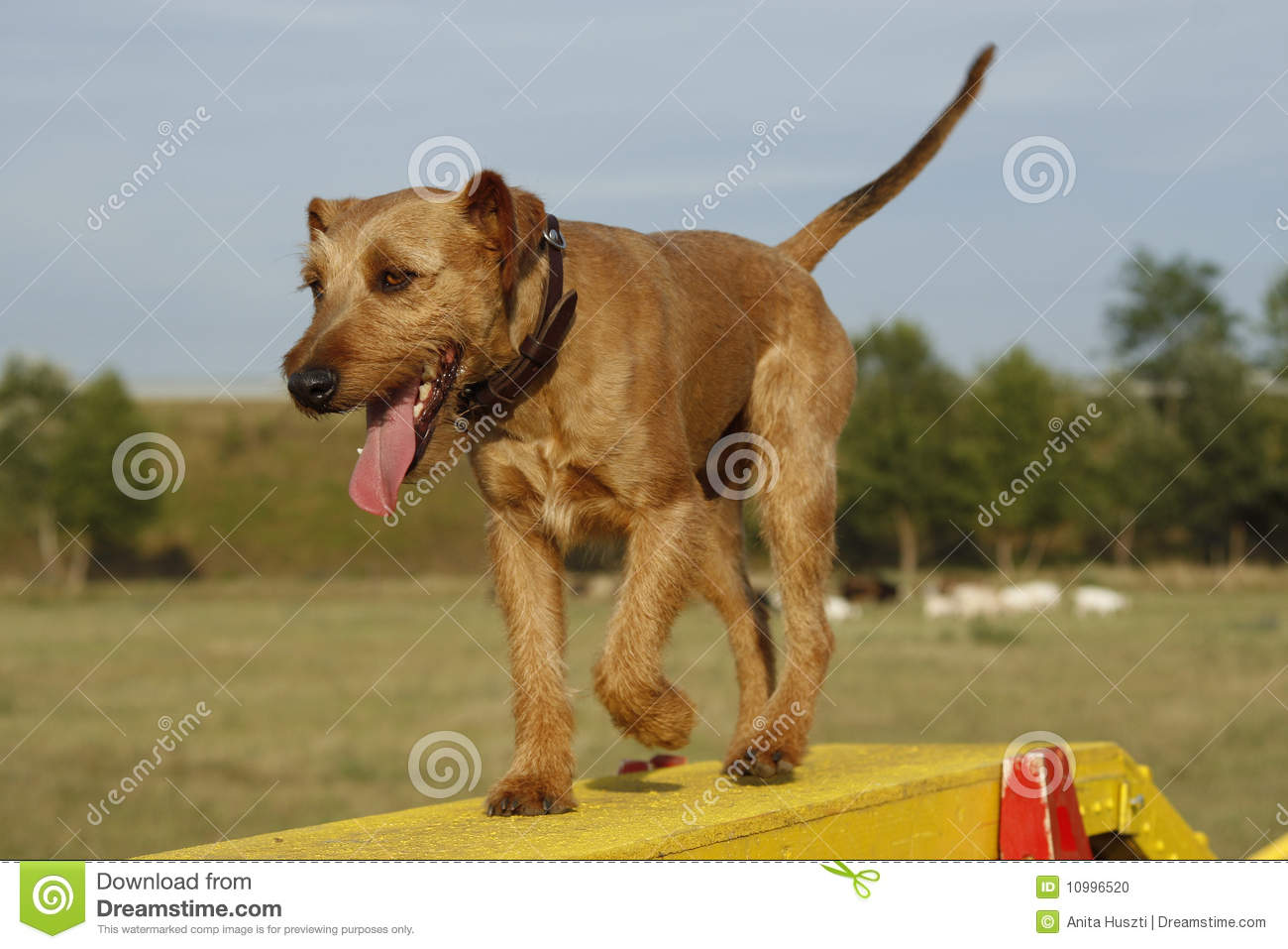 how to make a dog walk for agility