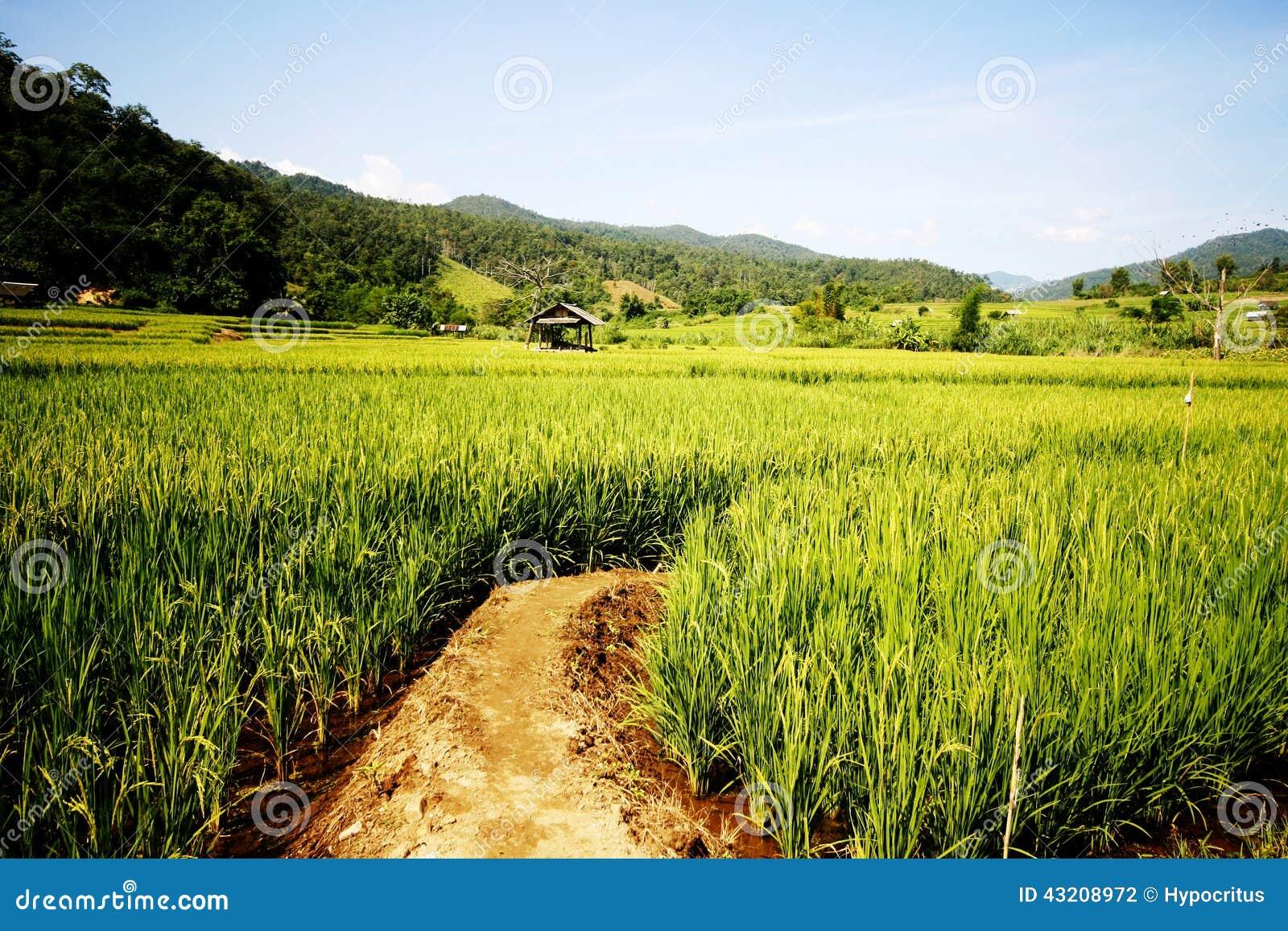 Download Irländare sätter in arkivfoto. Bild av paddy, bygd, bana - 43208972