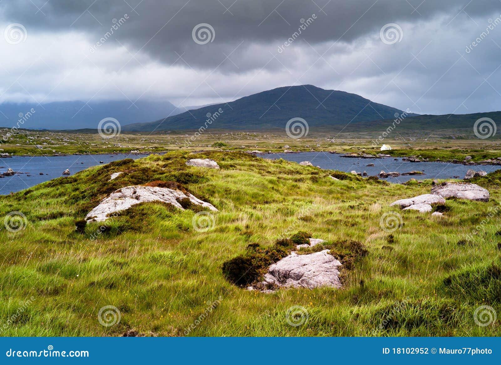 Irländsk liggande