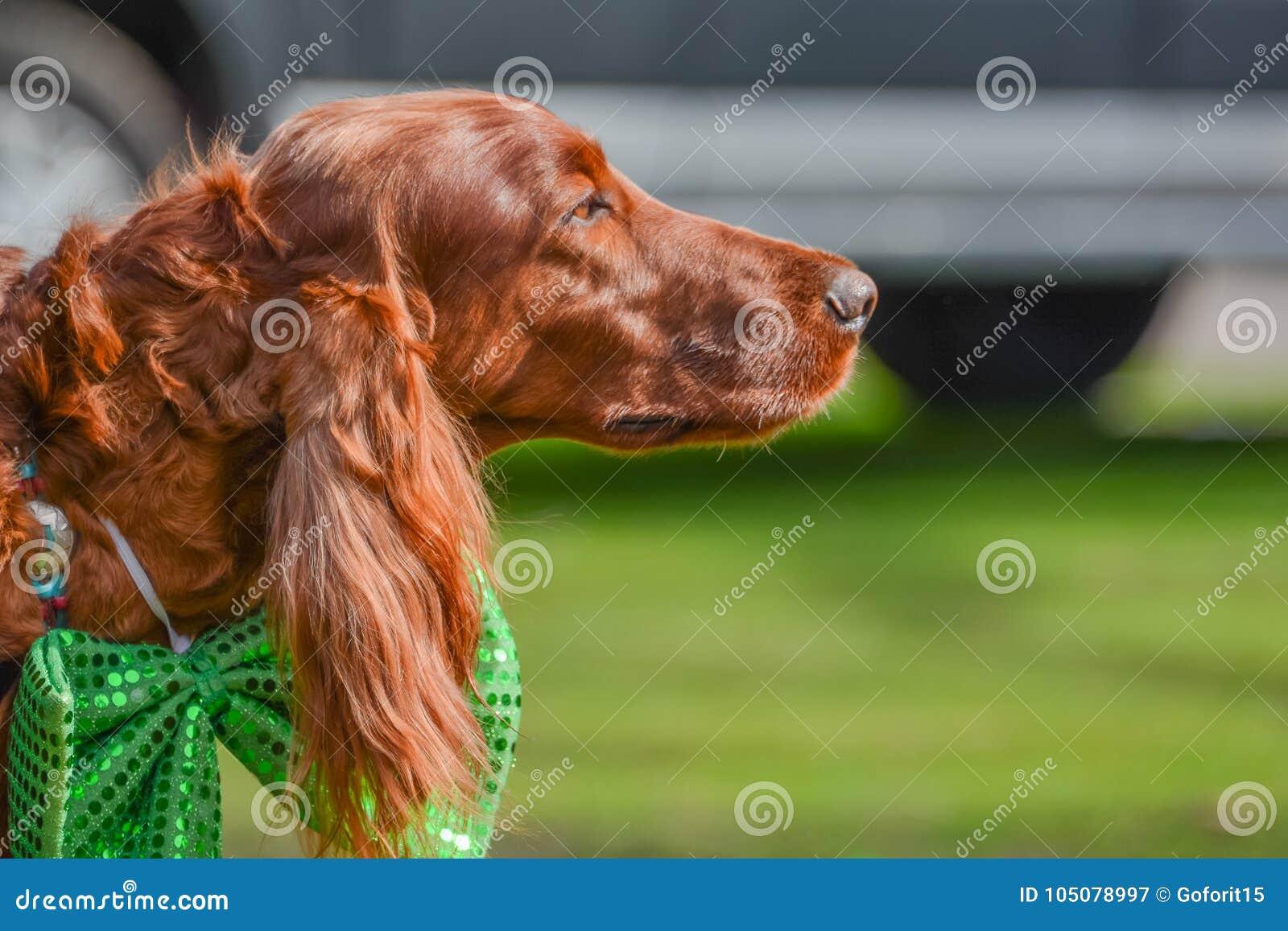 Irlandzki legart przy St Patrick ` s dnia przyjęciem