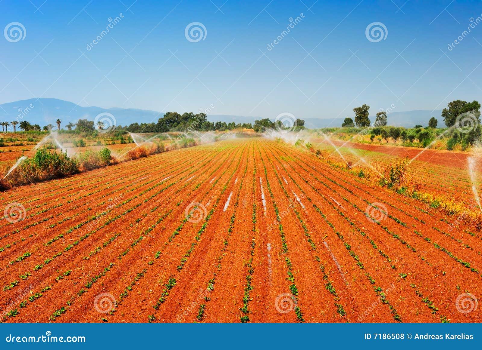 Irrigated farm