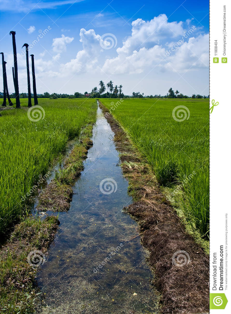 Irrigation Drain At A Paddy Field On A Sunny Day Stock