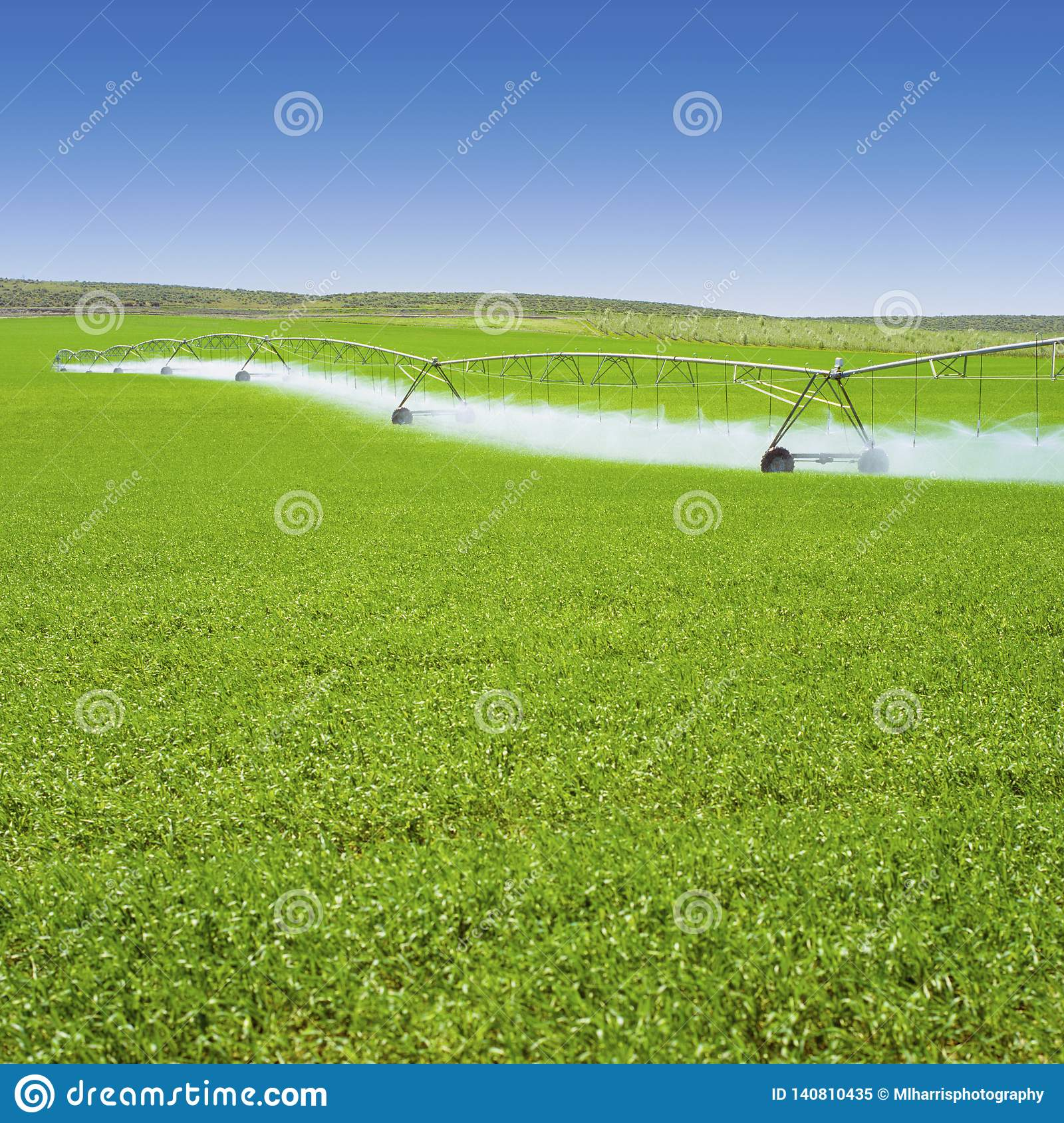 Irrigation equipment watering Spring crops in green farm field. Agriculture farming industry