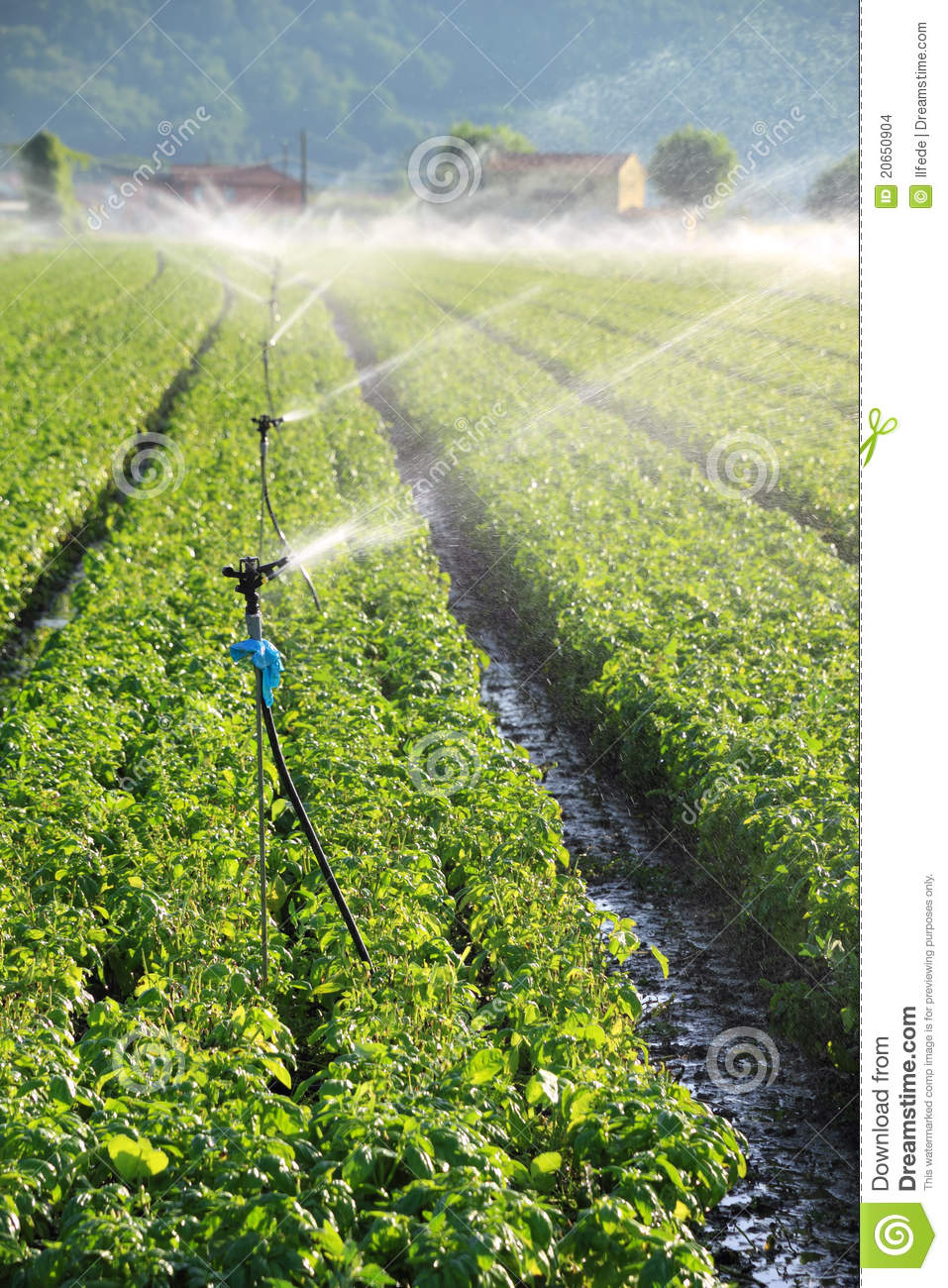 Irrigation On Farm Field Stock Photo Image Of Irrigating
