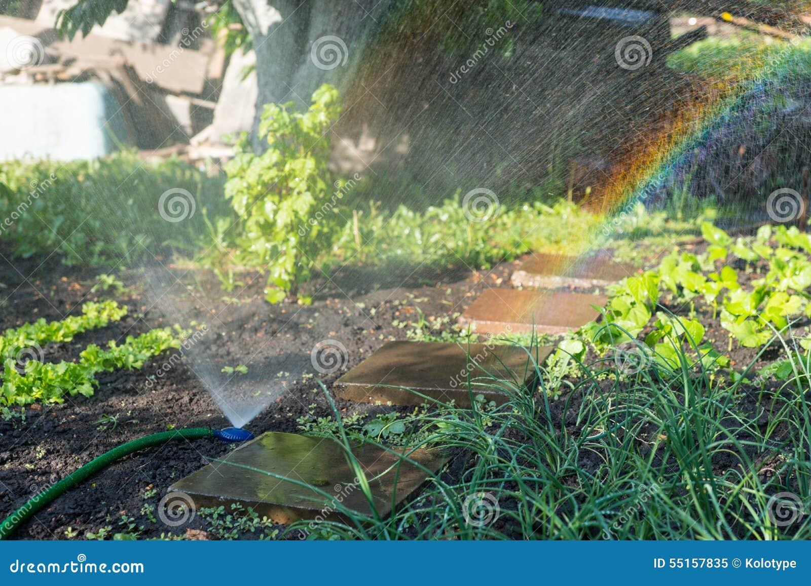 Irrigation Of Vegetables Stock Photography | CartoonDealer ...