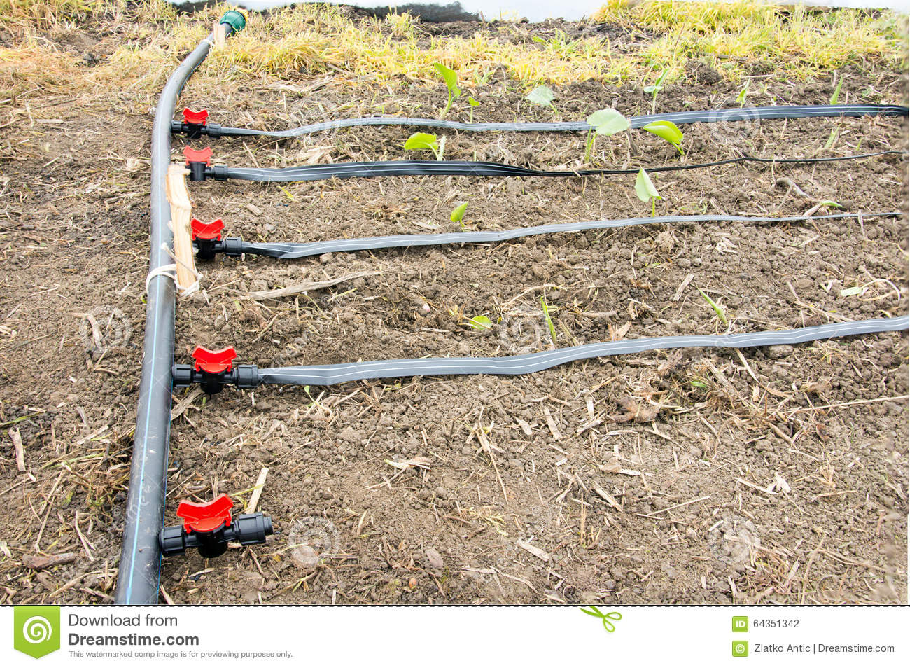 Irrigation system in greenhouse stock photo image 64351342 for Impianti irrigazione serre