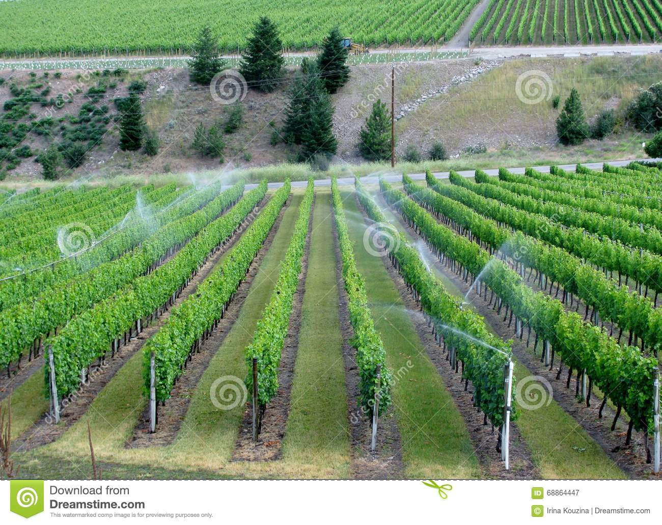 Irrigation system on a wine field