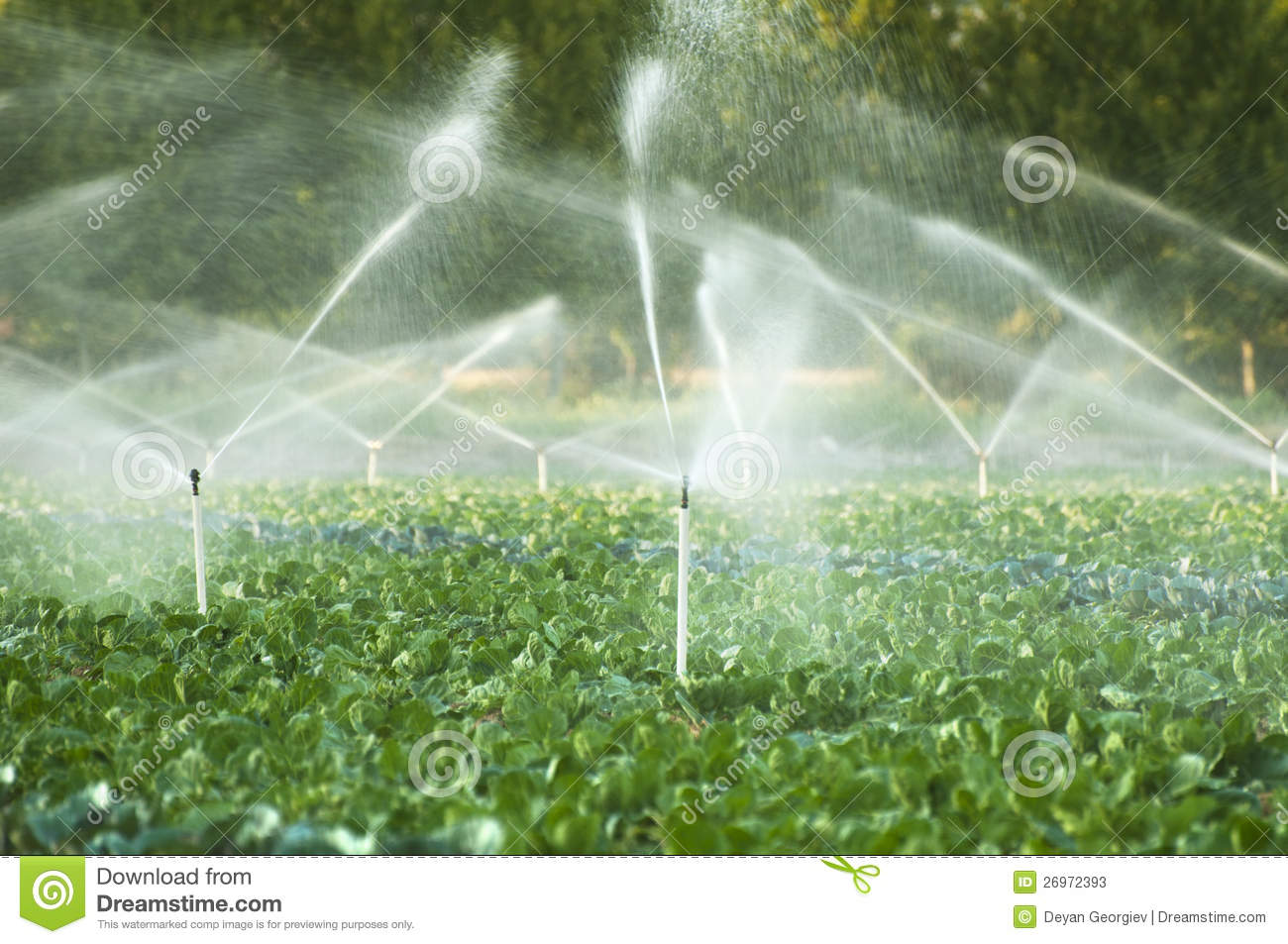 Irrigation Systems In A Vegetable Garden Stock Photos