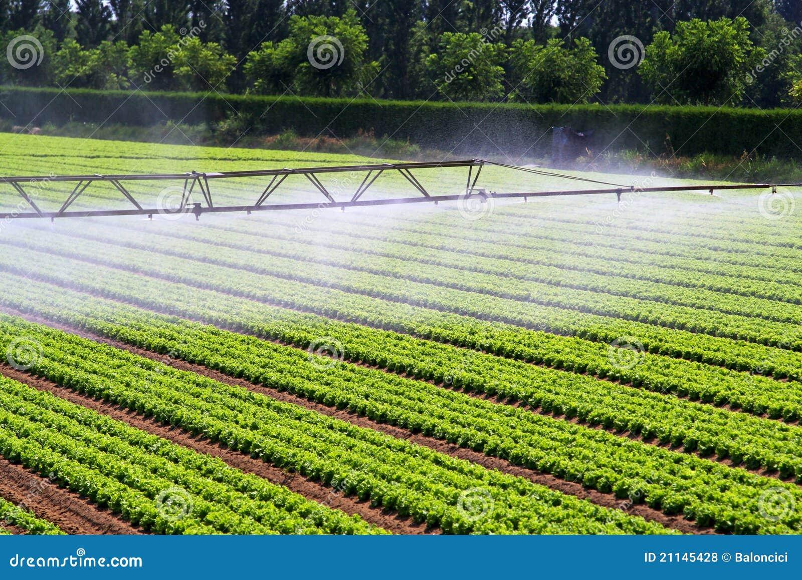Дождевание полив орошение