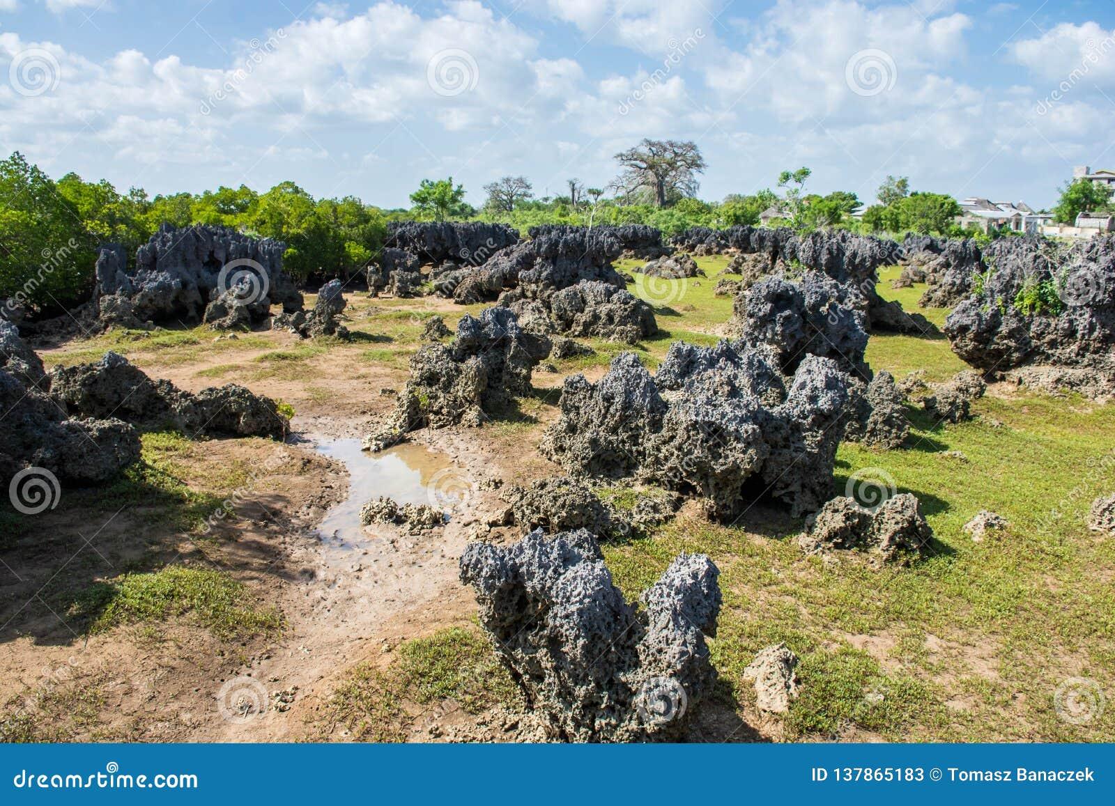 Isla de Wasini en Kenia