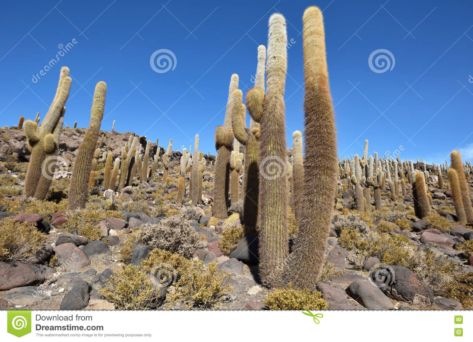 Isla del cactus en la sal de Uyuni plana