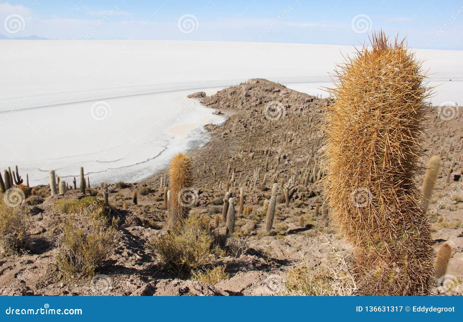 Isla del Pescado in Bolivia