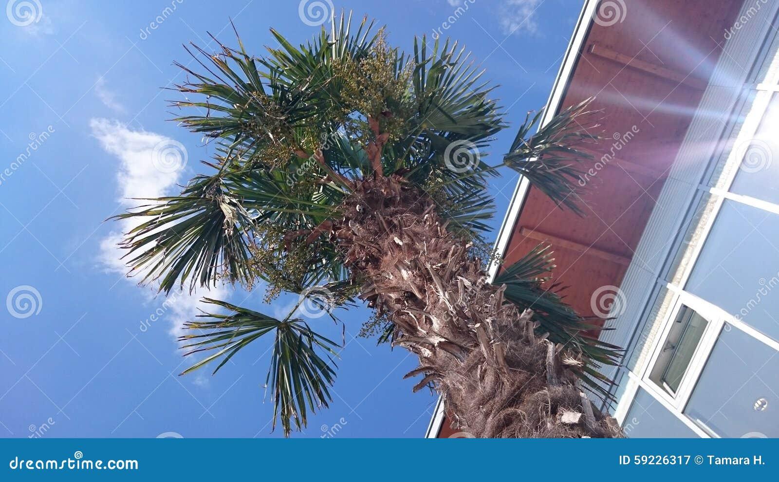 Download Isla Mediterránea Admitida Fotografía Córcega Imagen de archivo - Imagen de palma, árbol: 59226317