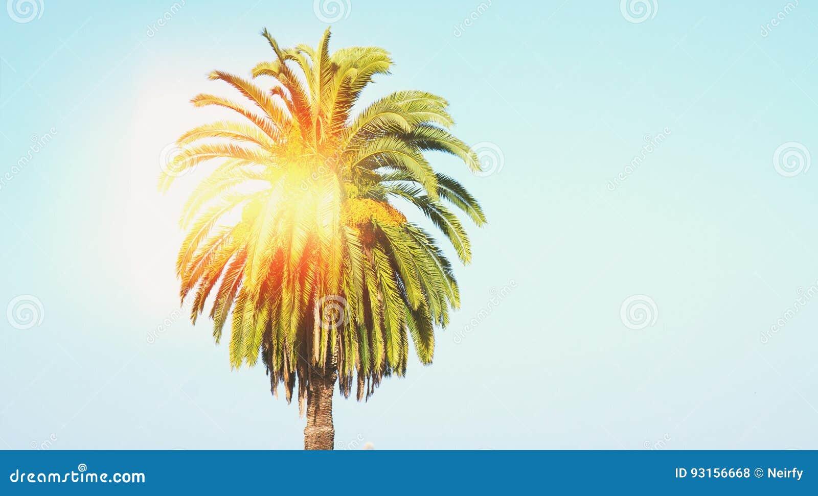 Isla mediterránea admitida fotografía Córcega