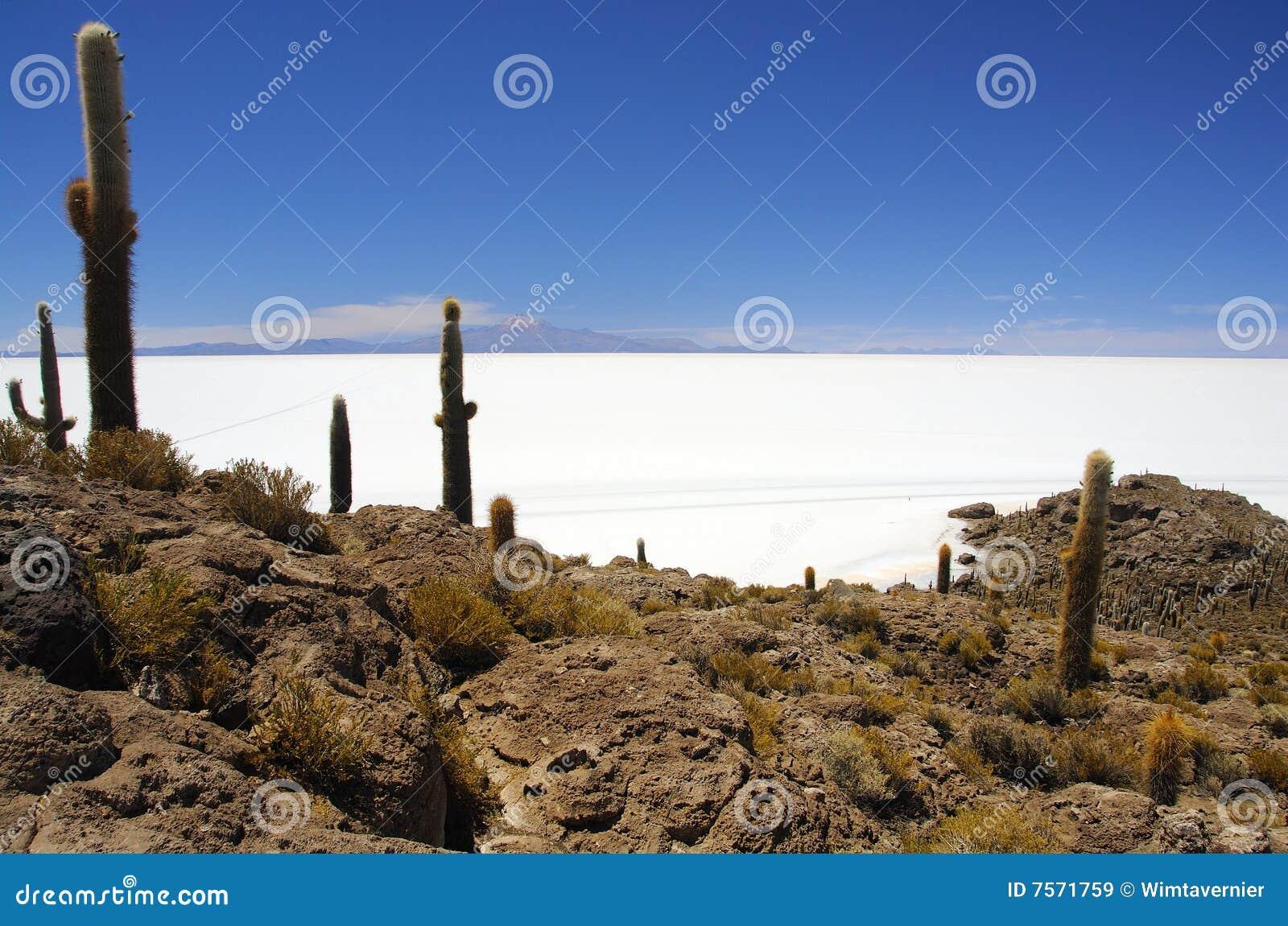 Isla Pescado nel mezzo di Salar de Uyuni