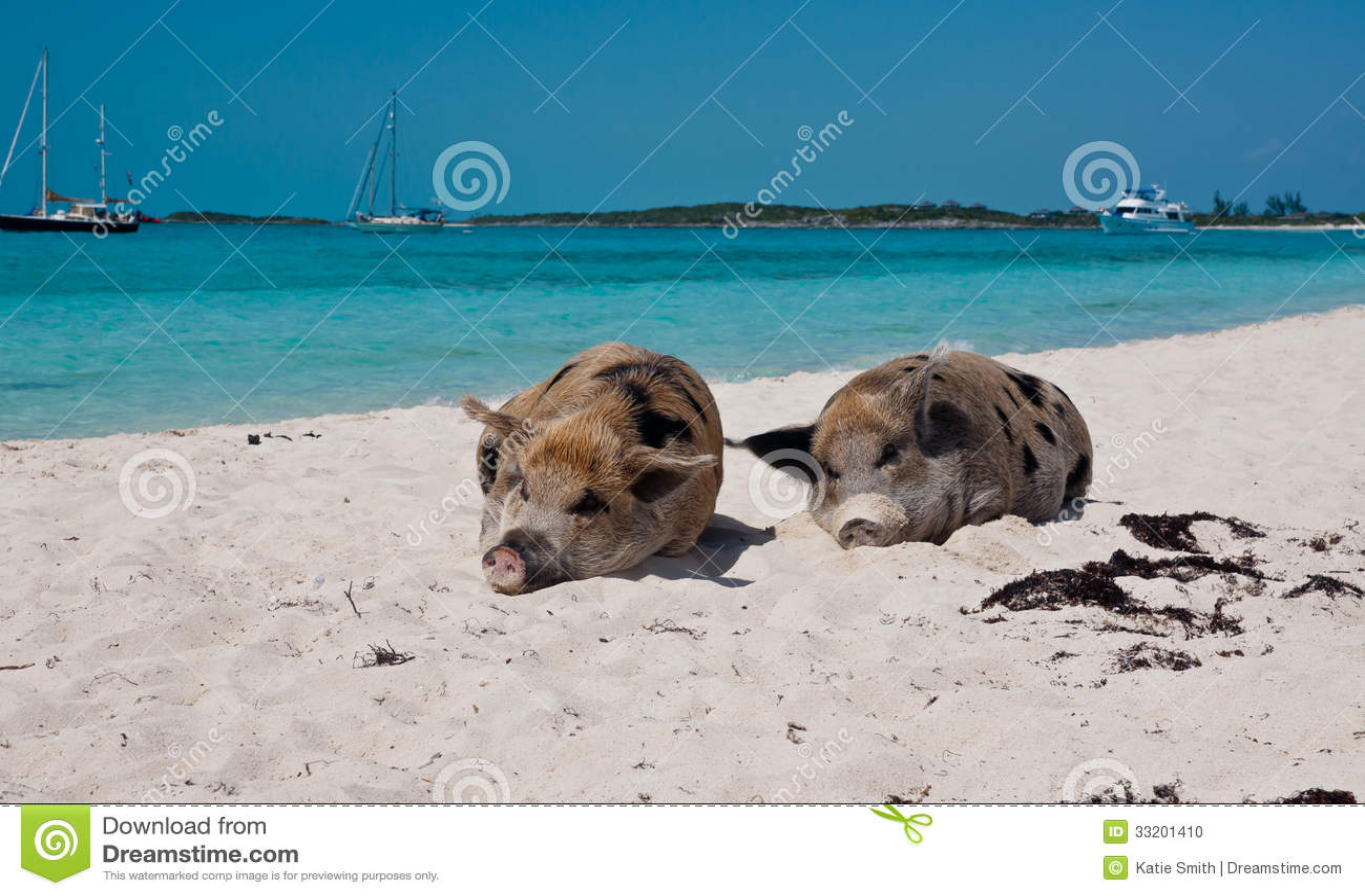 Big Island Wild Pig With Cavatelli Recipes — Dishmaps