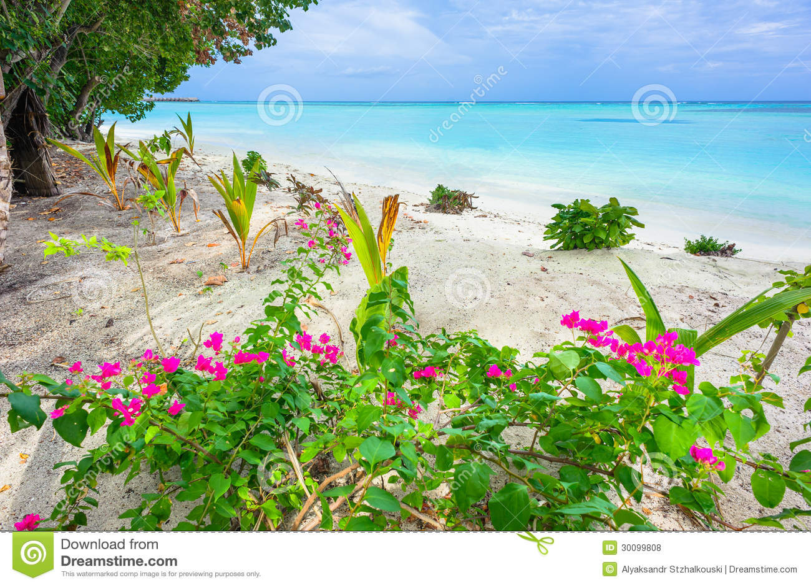 Tropical Island Flowers: Tropical Island Royalty Free Stock Photos