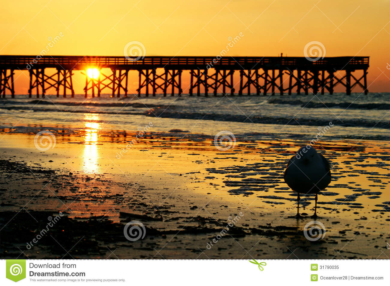 Isle of palms royalty free stock photo image 31790035 for Isle of palms fishing pier