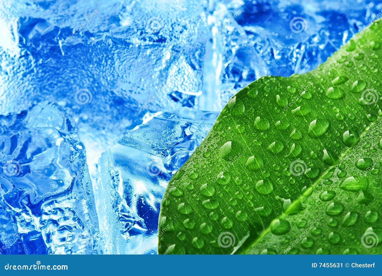 Isleaf för blå green