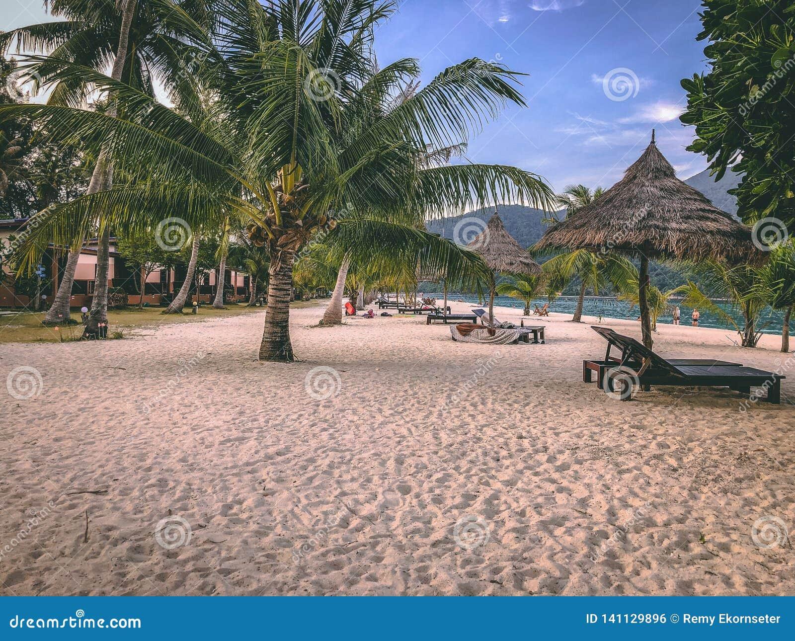 Isola Crystal Clear Sea, blu, palme di Paradise, su fyre