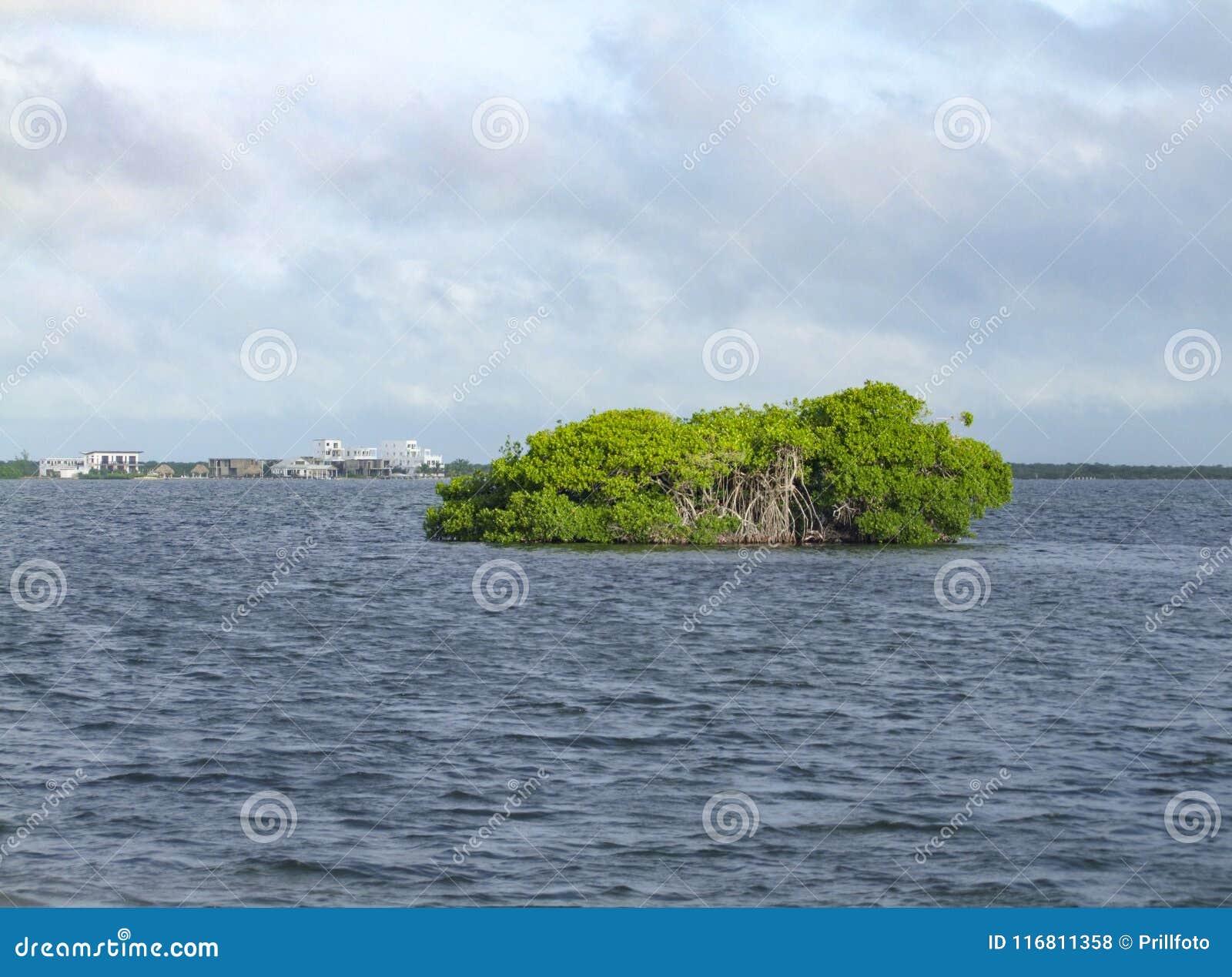 Isola della mangrovia
