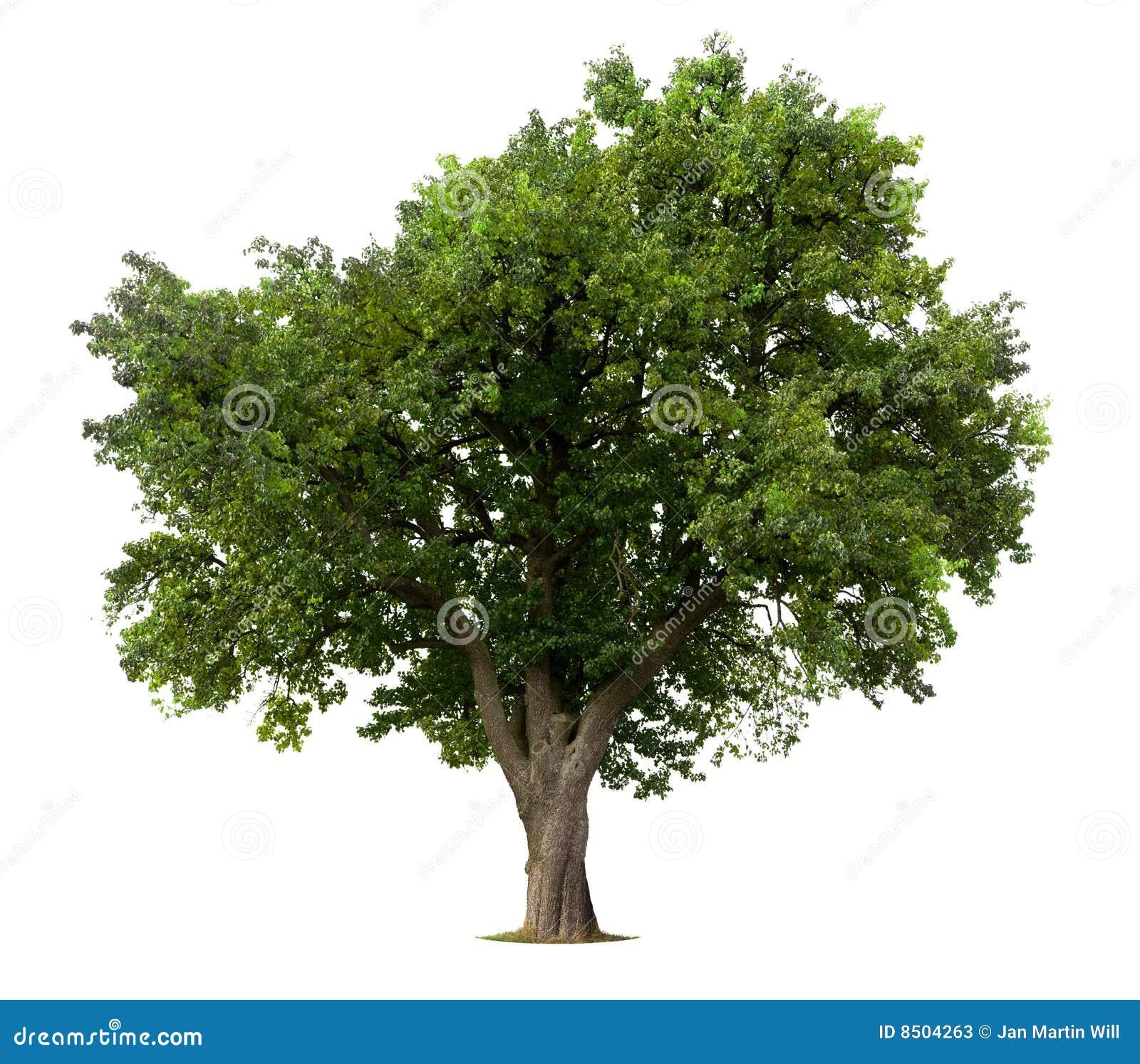 how to cut downan apple tree