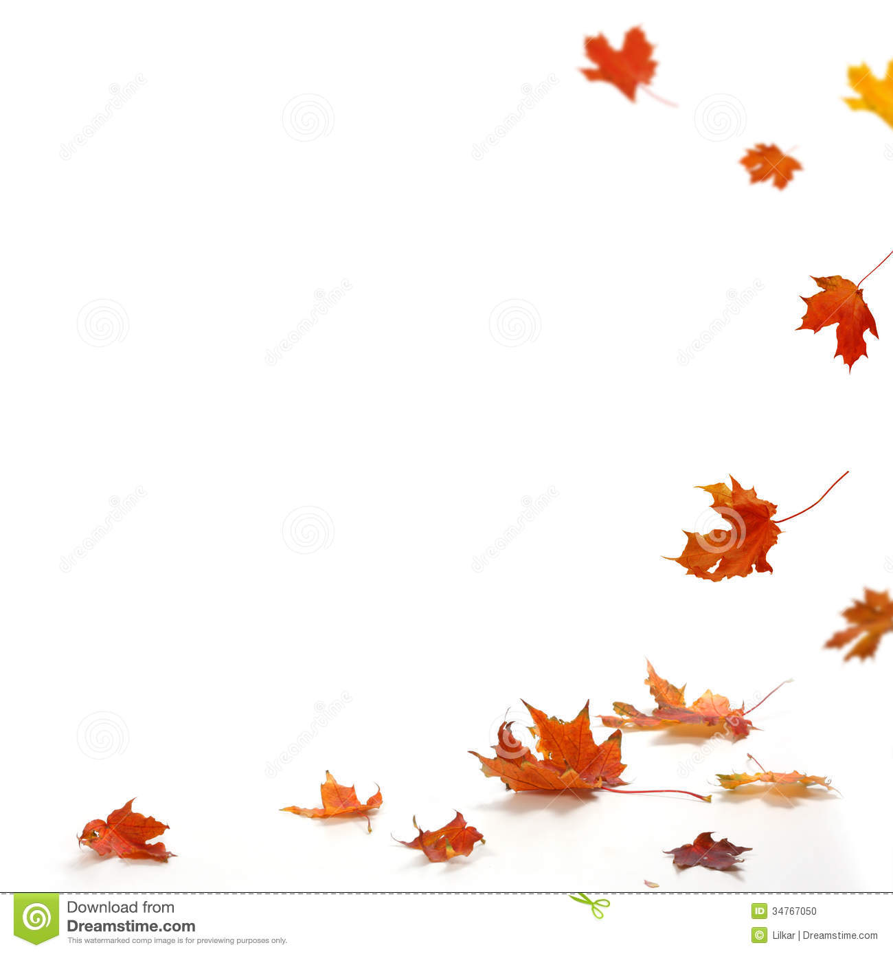 Isolated Autumn Leaves Stock Photo Image Of Color