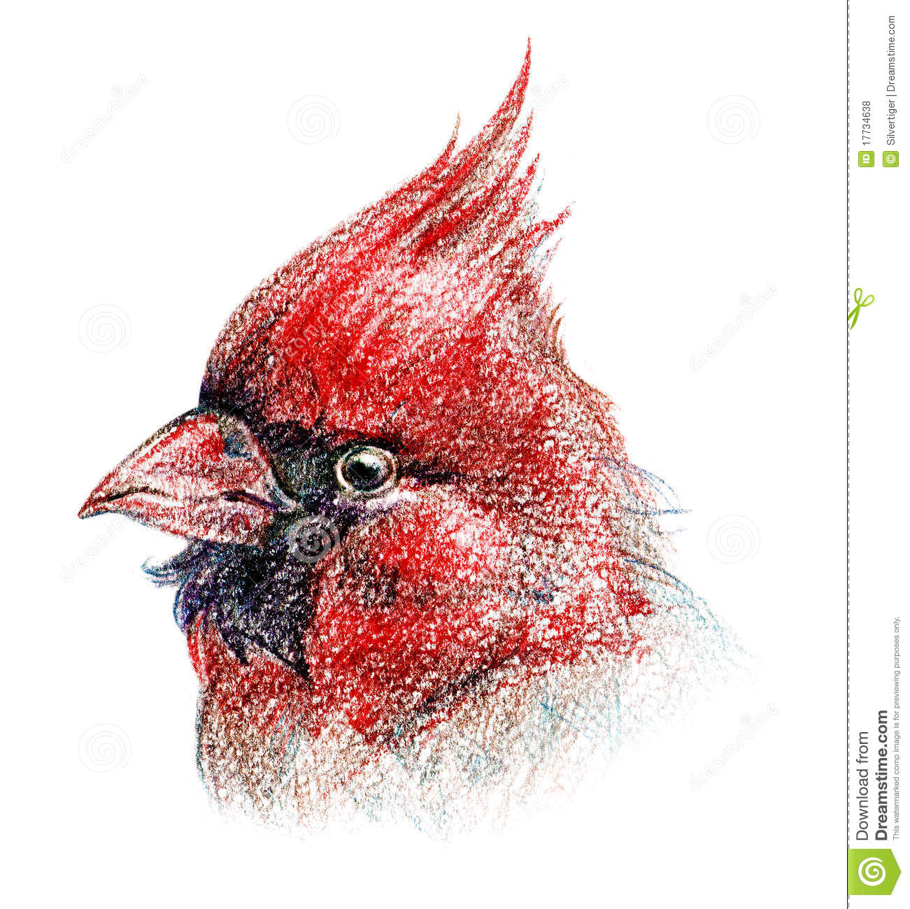Red northern cardinal bird portrait pencil sketch