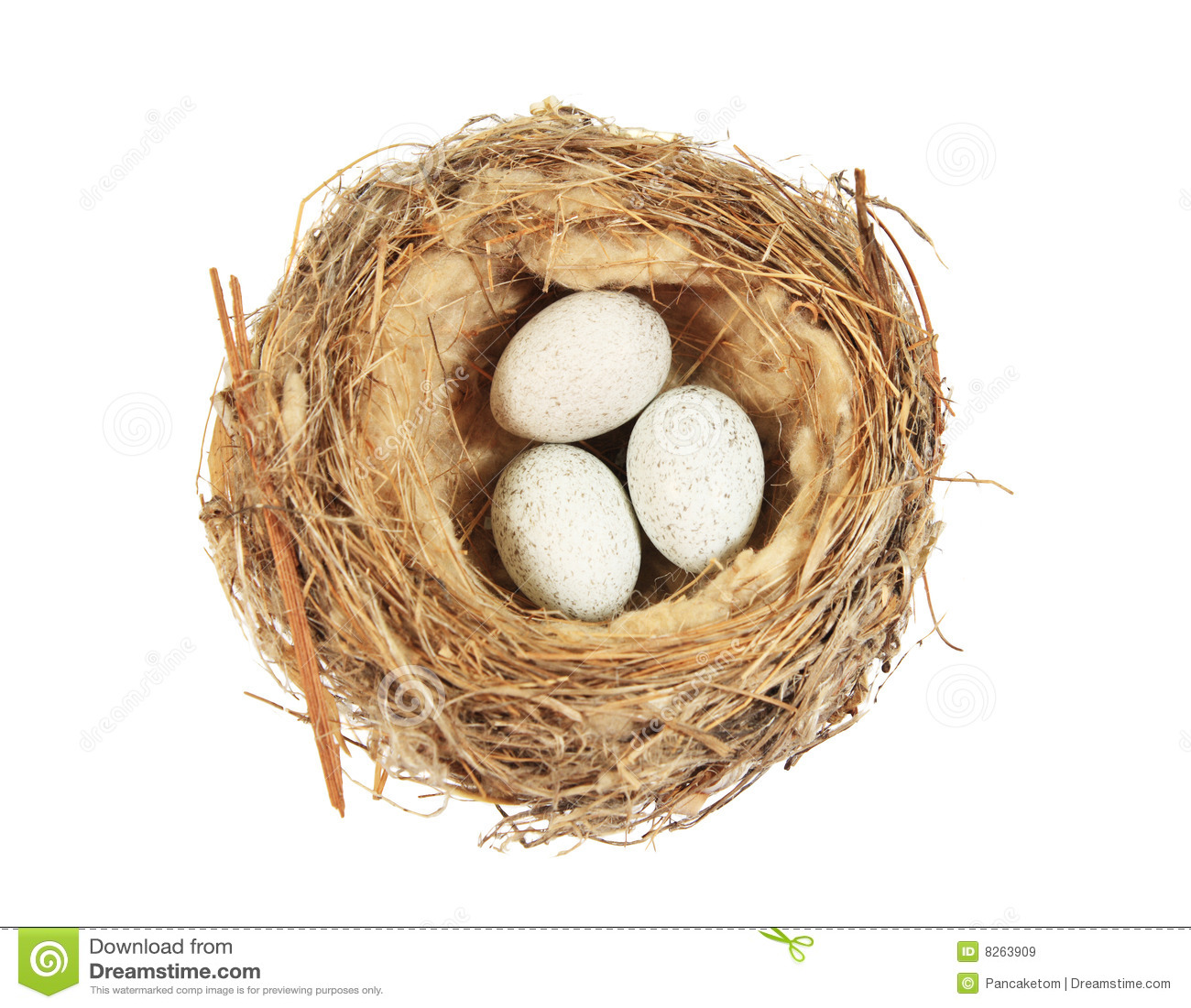 Isolated bird nest