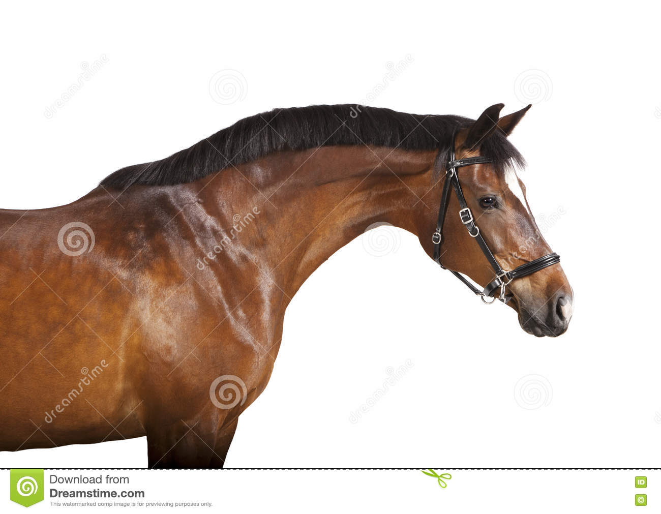 Isolated Brown Horse Head Stock Photo - Image: 73038078