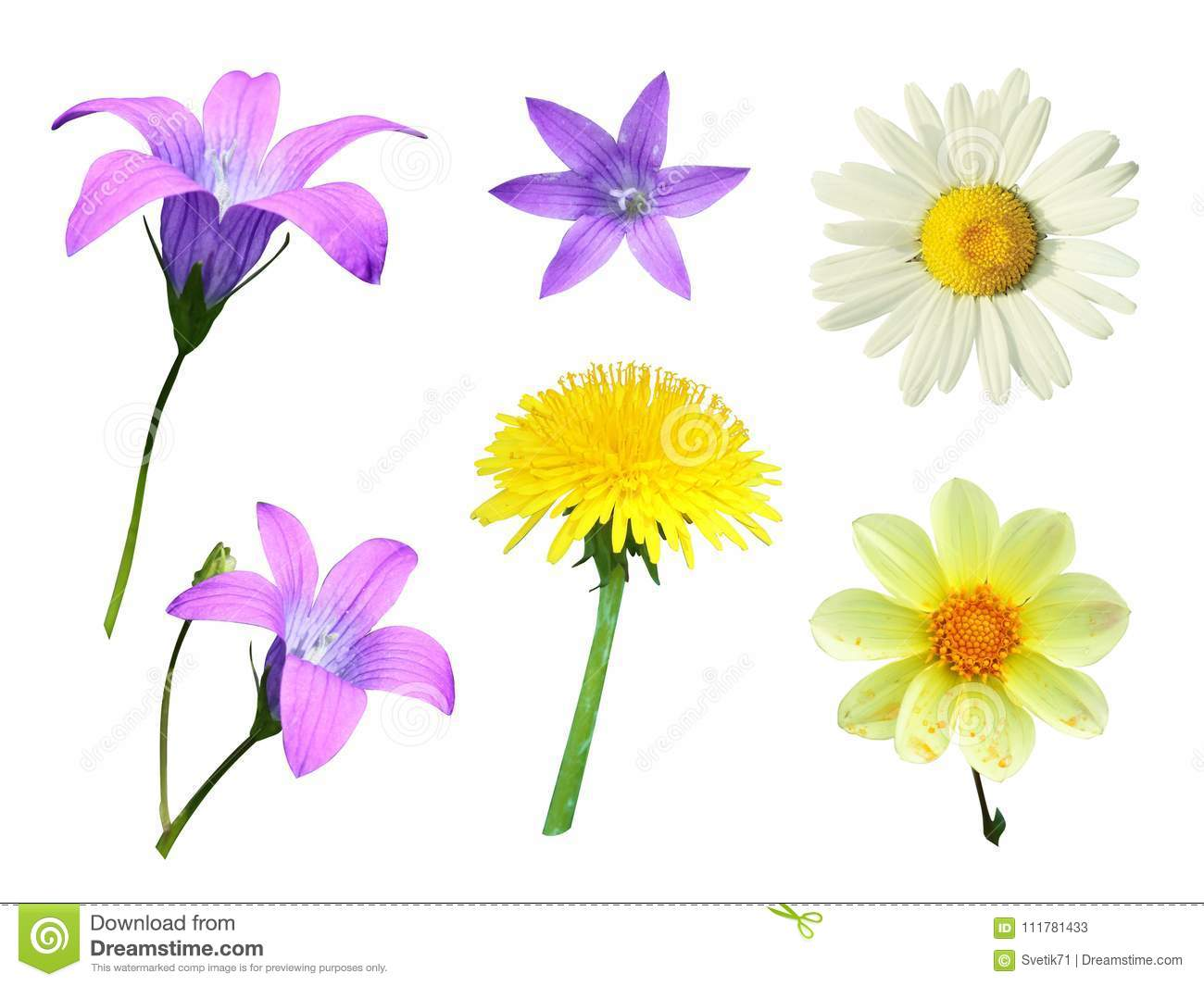 Set of flowers on a white background