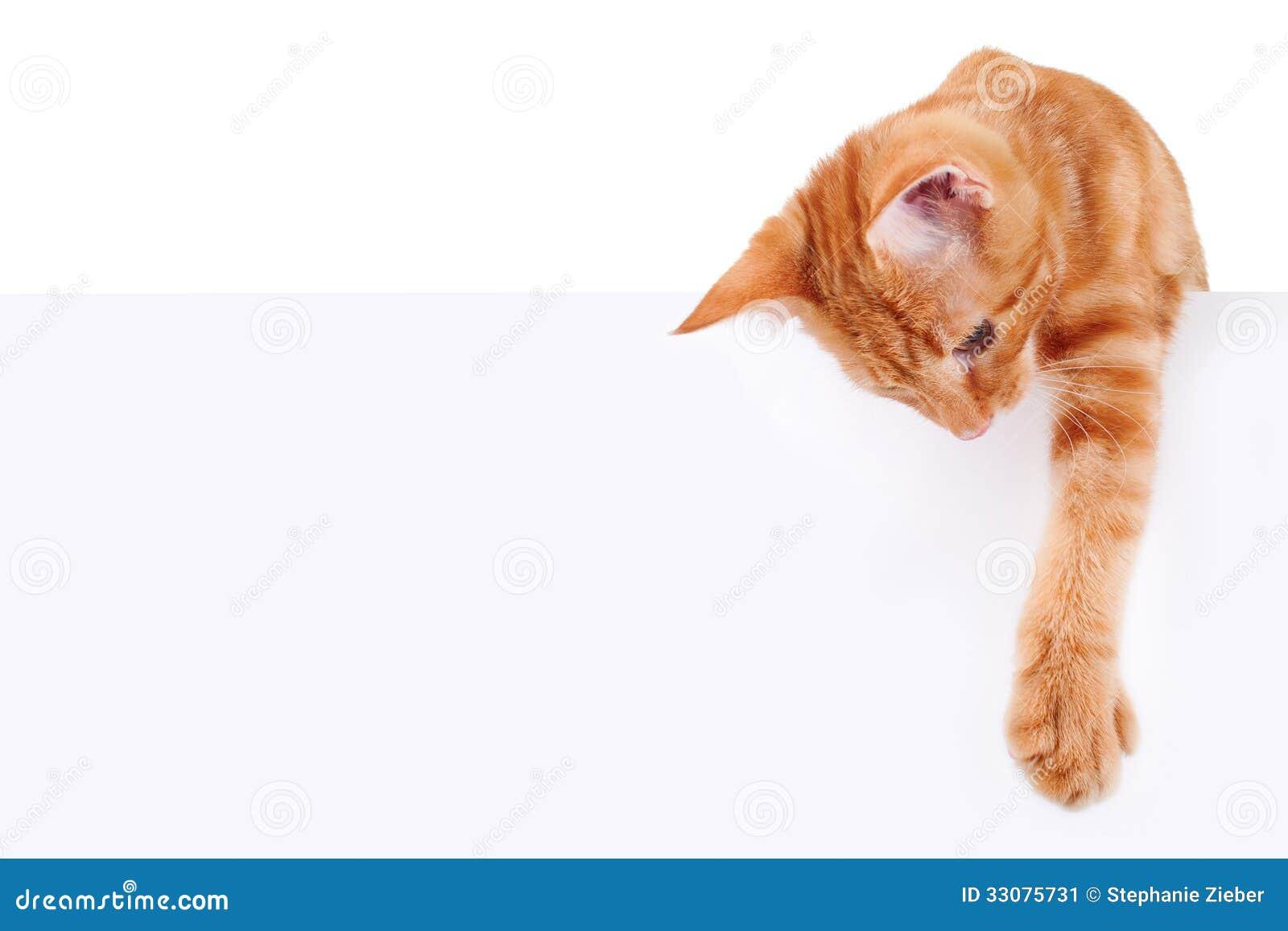leather cat collar breakaway