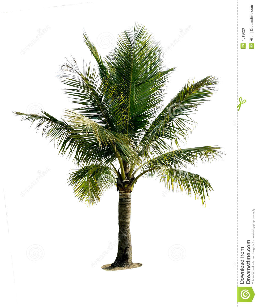 the coconut tree legend This kind of statement might make you think twice about sitting under the idyllic swaying fronds of a coconut tree next time you're  what has become an urban legend.