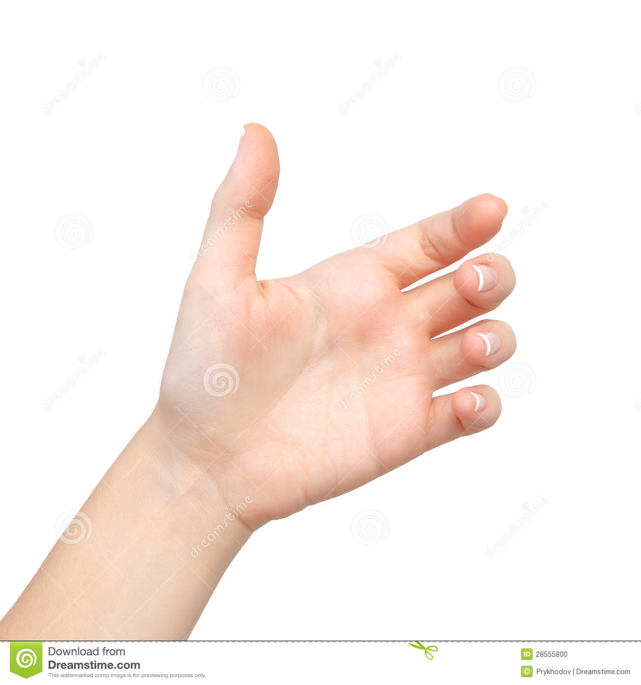 Isolated Female Hand Palms Held Subject Stock Photo - Image: 28555800