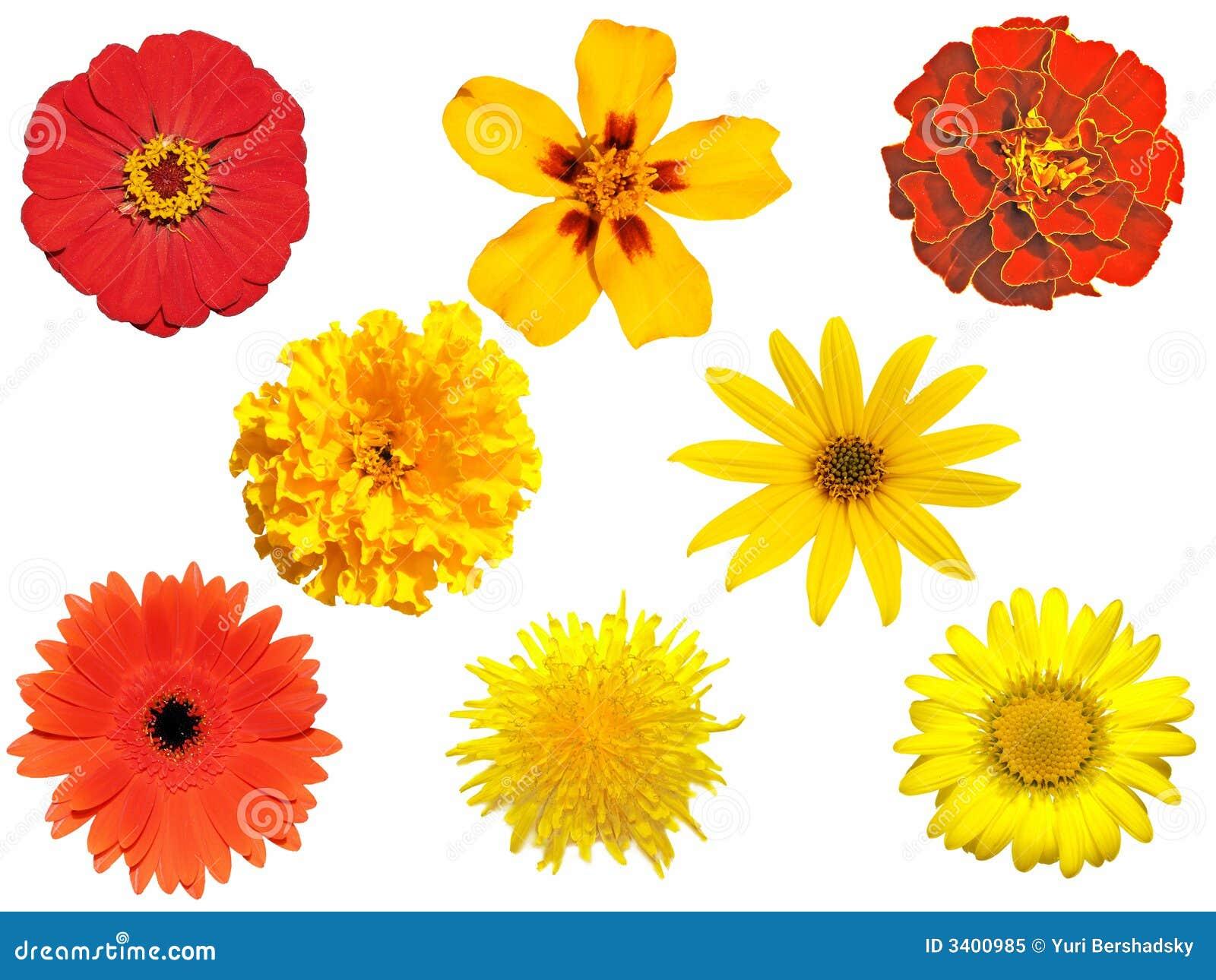 Isolated Flowers Stock Image. Image Of Close, Botanic