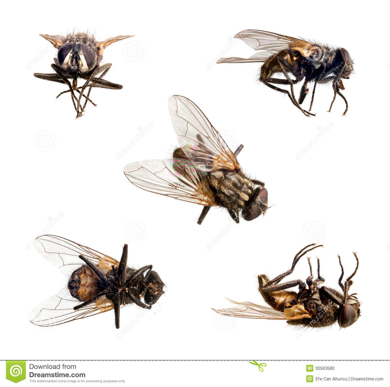 isolated fly stock photo image 30563580 dragonfly clipart border dragonfly clip art free