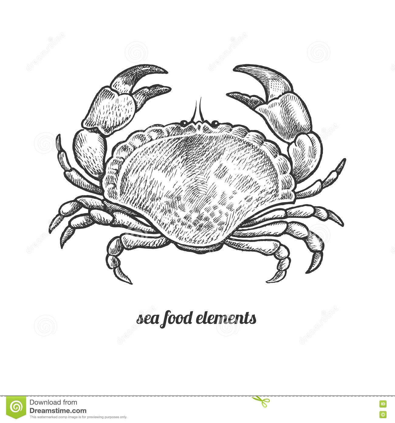 isolated image crab on white background stock vector illustration Food Chains Starting with the Sun in the Ocean seafood vector illustration isolated image on white background vintage style hand drawn seafood image