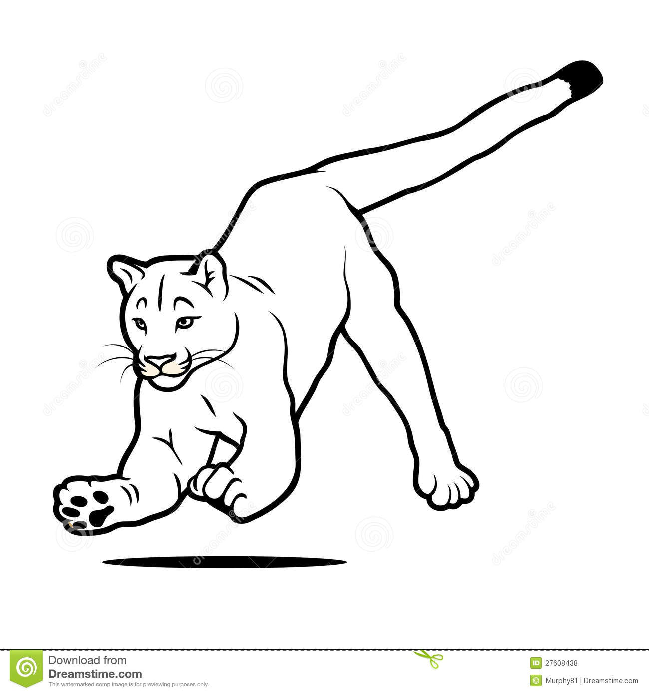 isolated jumping cougar royalty free stock photos  image