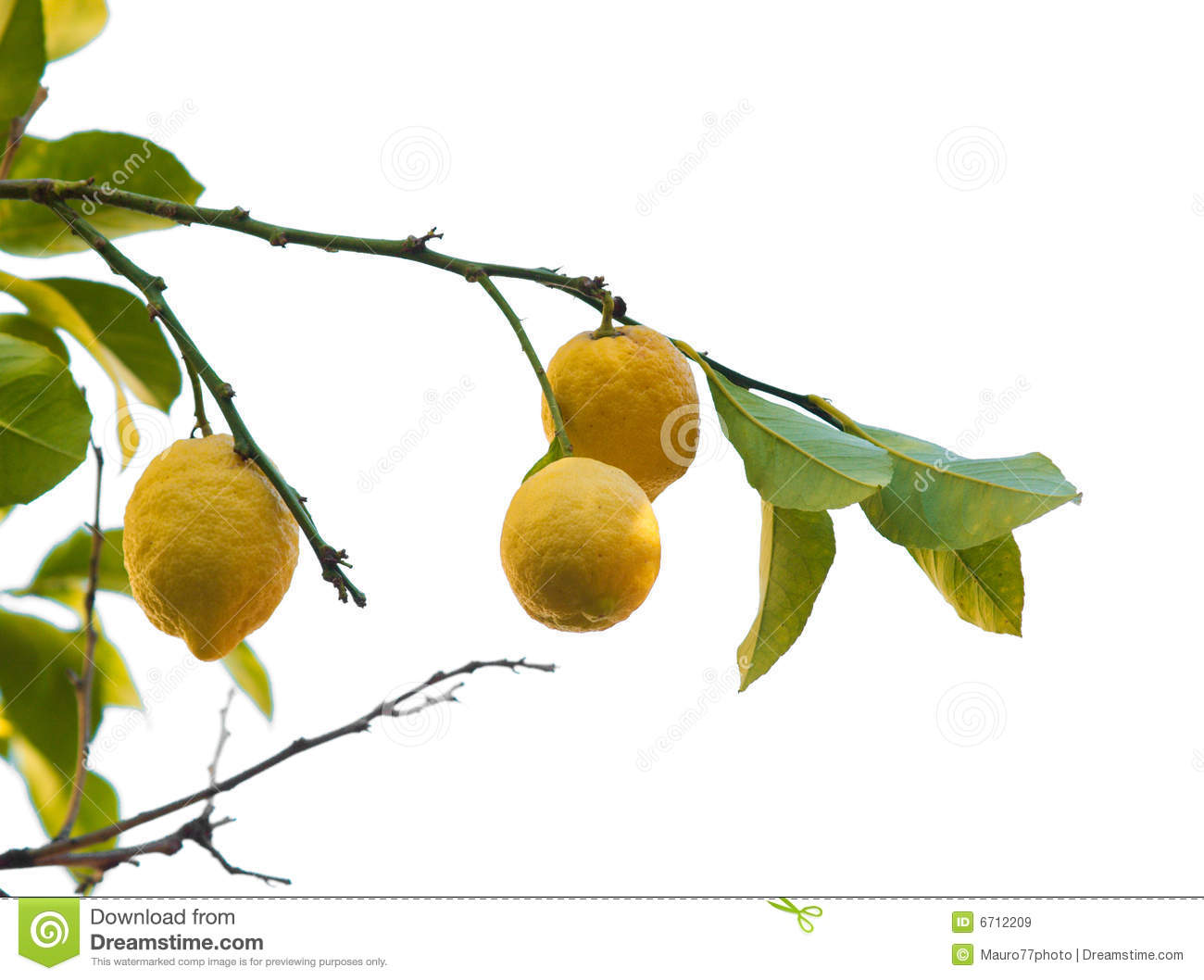 Different herbs royalty free stock image image 16265346 - Isolated Lemon Tree Royalty Free Stock Images