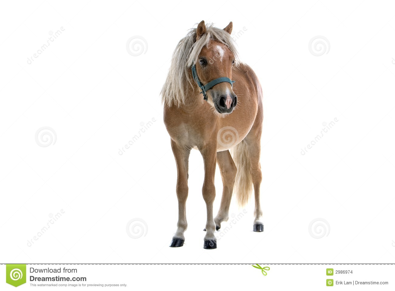 Isolated Light Brown Horse Stock Images - Image: 2986974