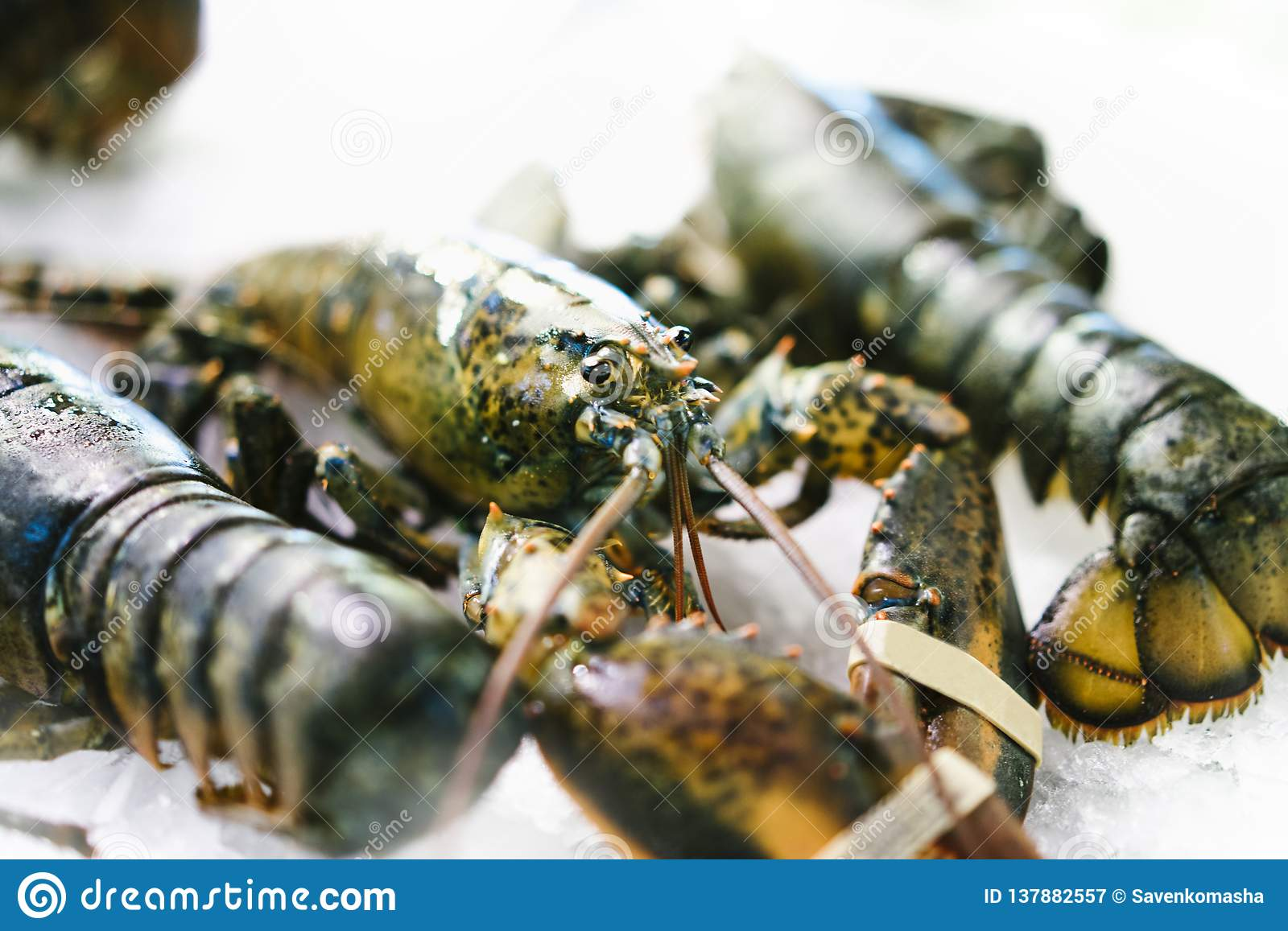 Isolated lobster on ice background on the market, closeup of fresh crustacean products in restaurant, useful shellfish sea food