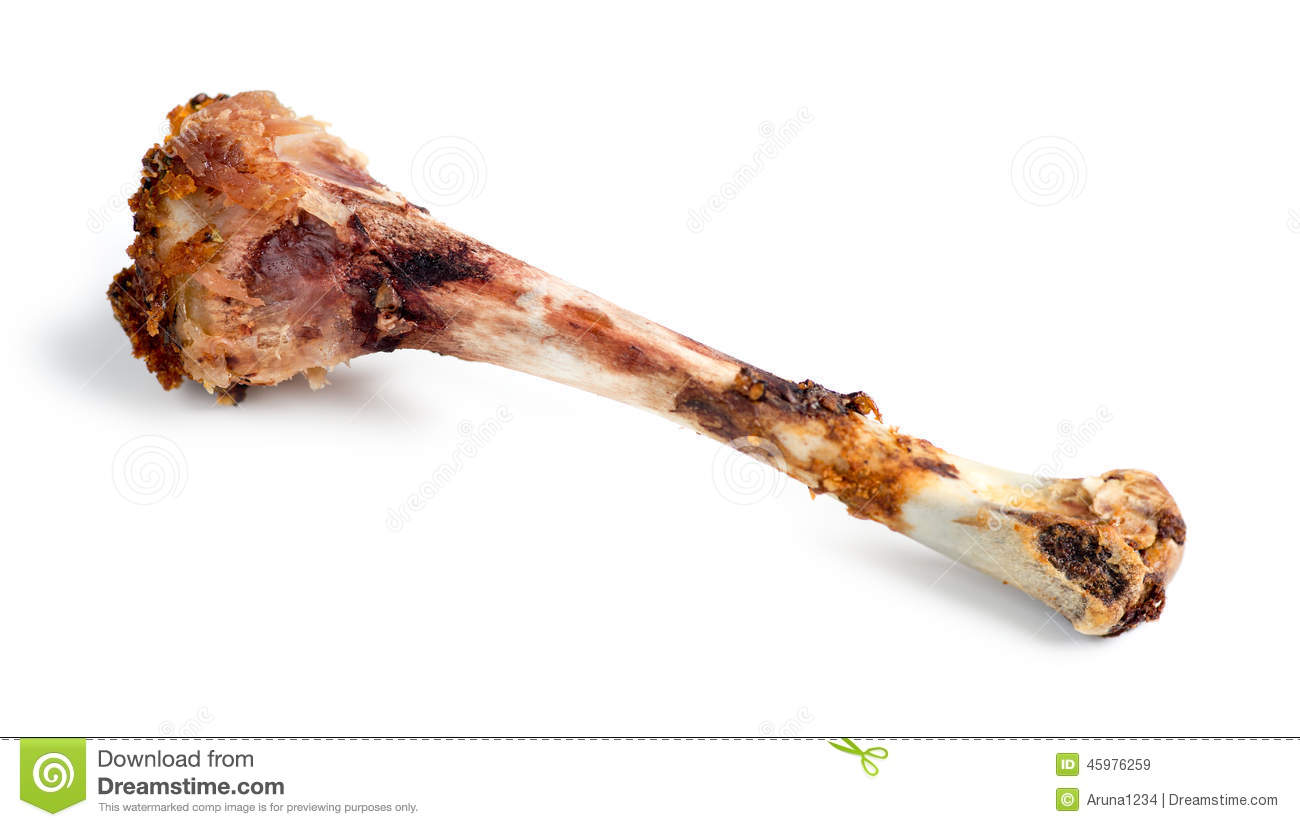 Isolated Macro Of Eaten Chicken Drumstick Bone Stock Image