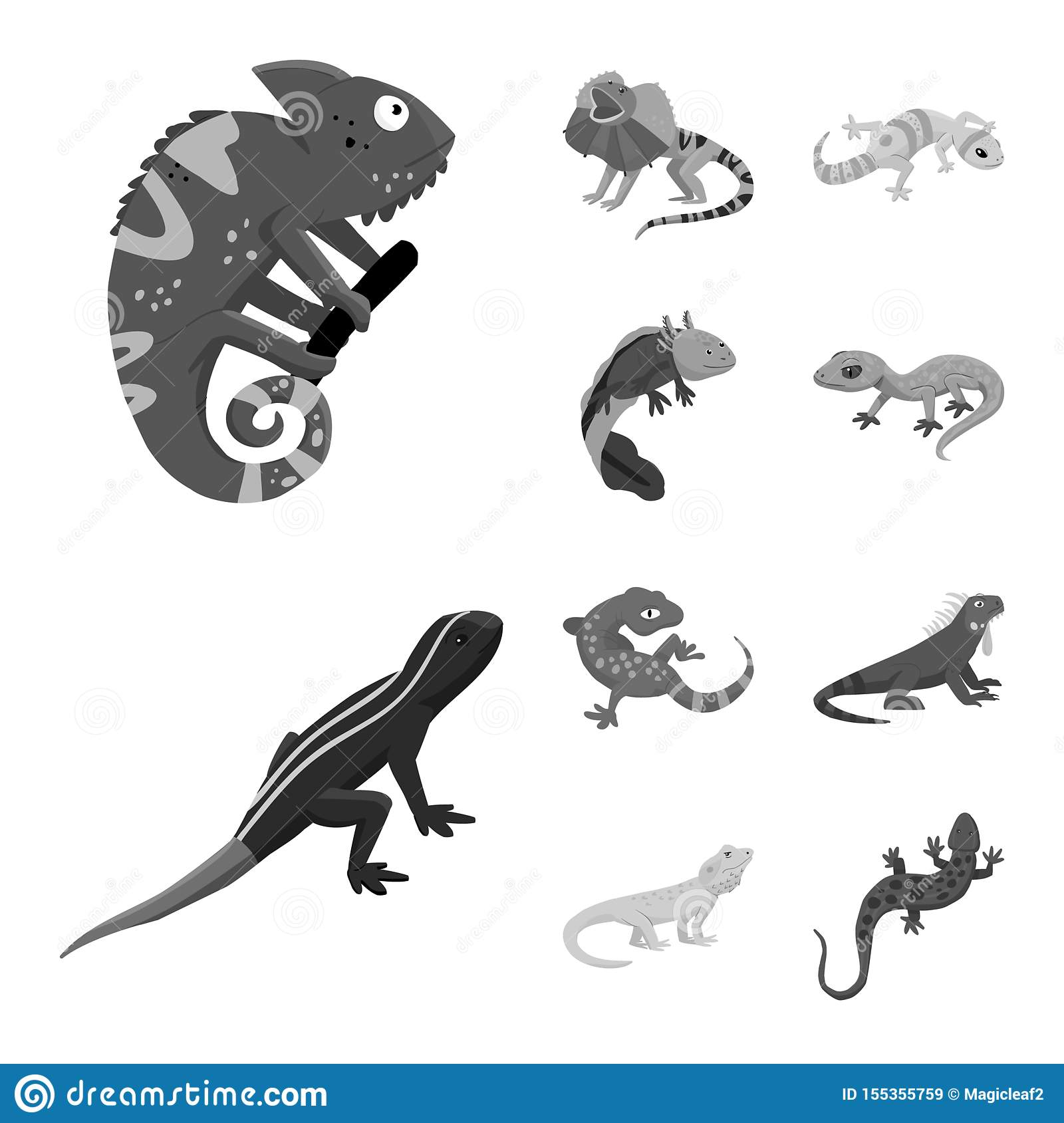 Isolated object of wild and exotic sign. Set of wild and fauna vector icon for stock.