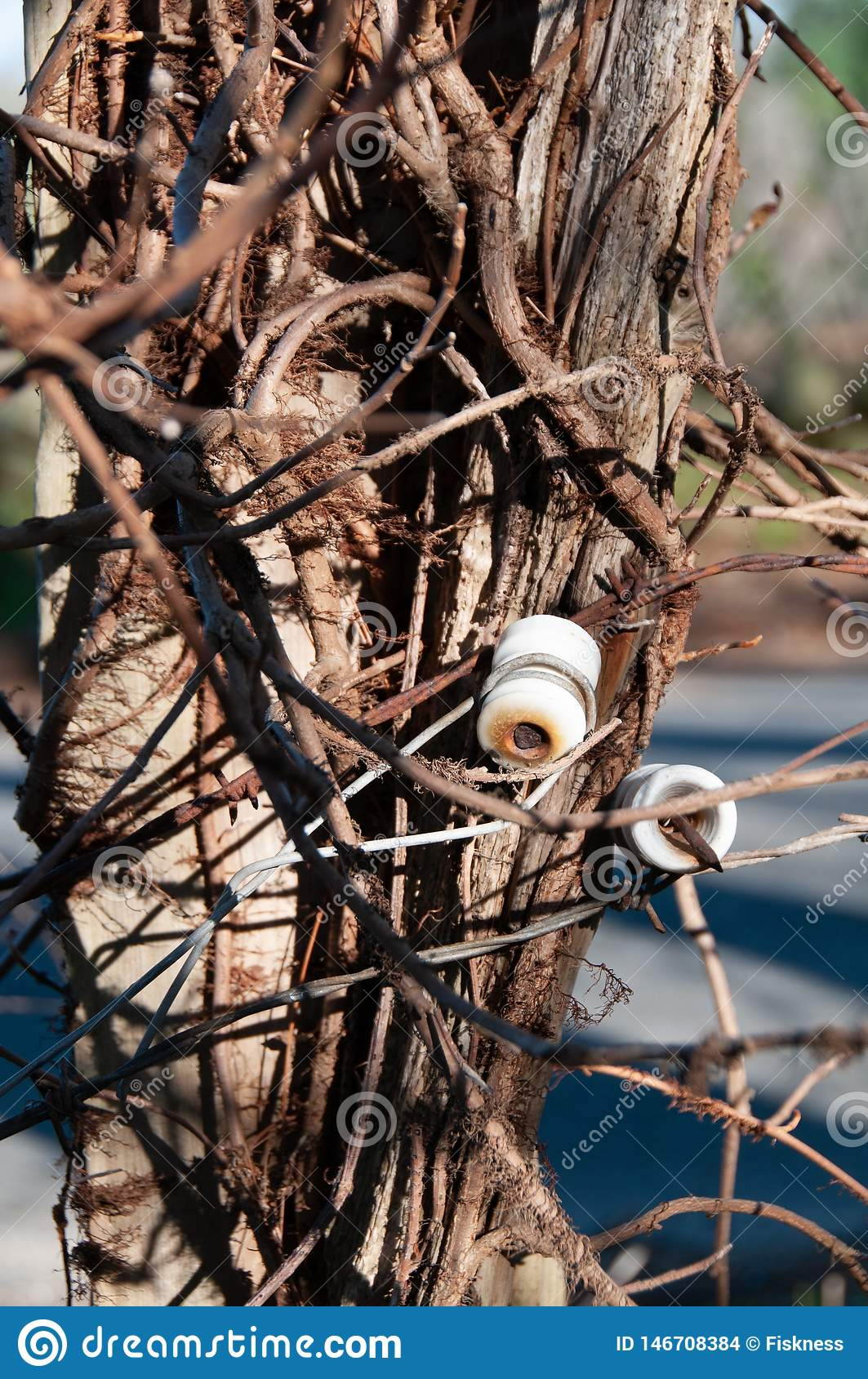 Picture of: Isolated Old White Glass Insulators On A Cedar Fence Post Stock Photo Image Of Nail Electrical 146708384
