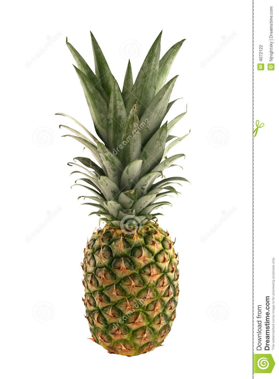 Children who ate pineapple showed a lower risk of viral infections and children who the most had almost four times more white blood cells than the other two groups. This clearly shows that consuming pineapple daily is positively linked to increased immunity levels.