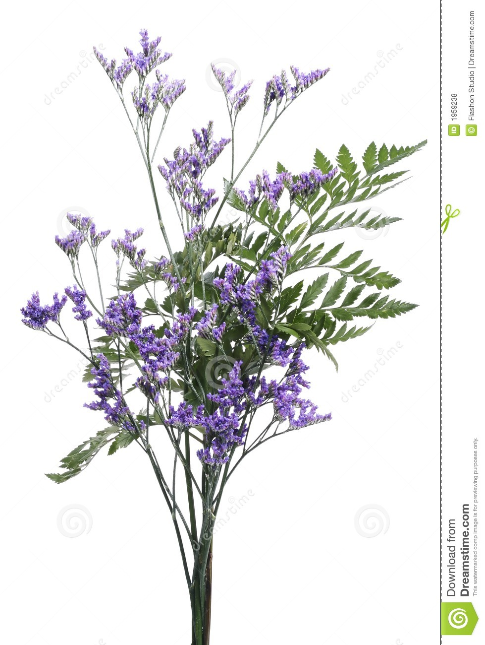 Isolated purple flower bouquet stock photo image of colors isolated purple flower bouquet izmirmasajfo Images