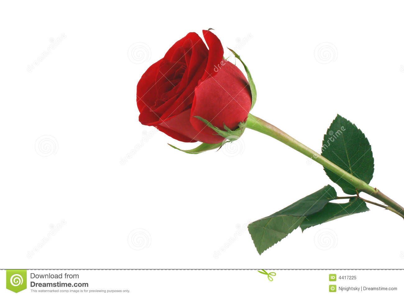 Beautiful Single Red Rose Flower Isolated Royalty Free: Isolated Red Rose On White Background Stock Image