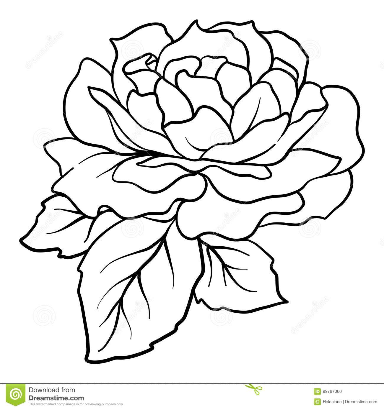 Isolated rose outline drawing stock line vector illustration